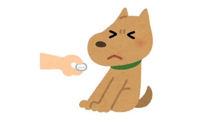 薬を飲まない犬